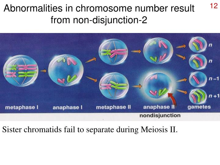 Abnormalities in chromosome number result from non-disjunction-2