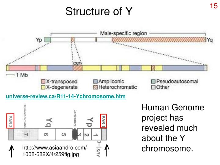 Structure of Y