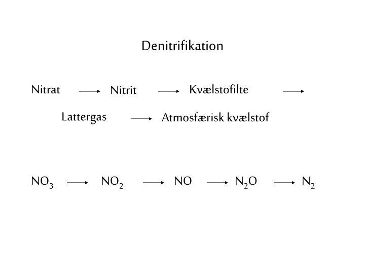 Denitrifikation