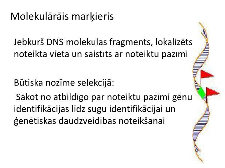 Molekulārāis marķieris