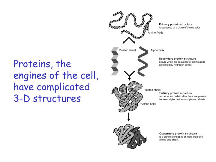 Proteins, the