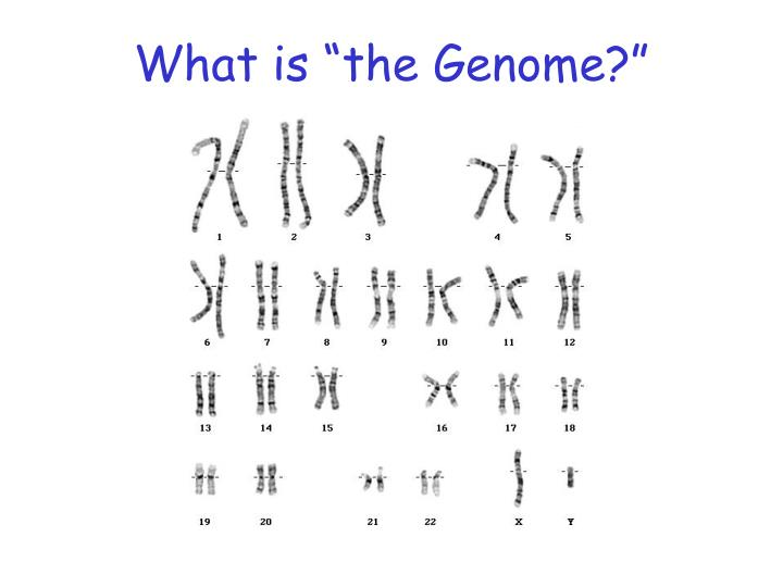"""What is """"the Genome?"""""""