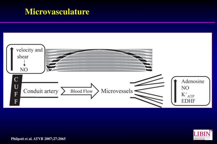 Microvasculature