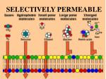 selectively permeable