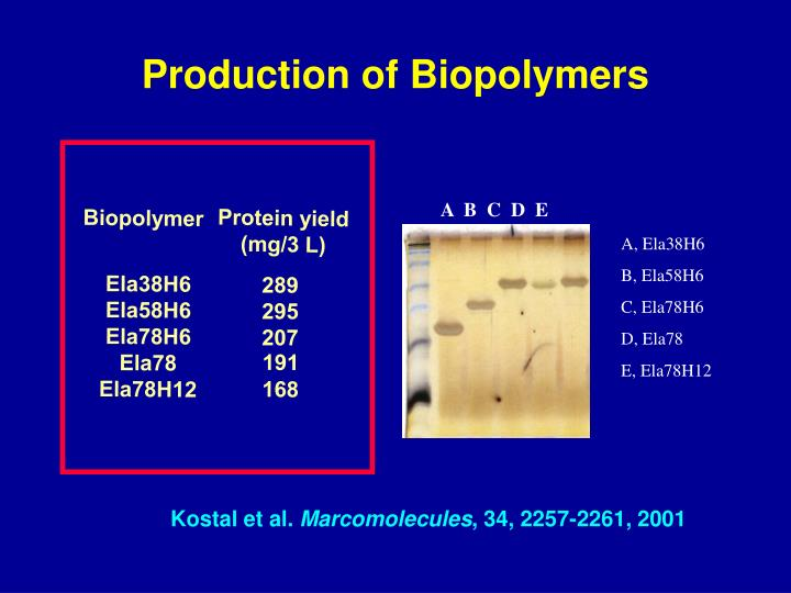 Production of Biopolymers
