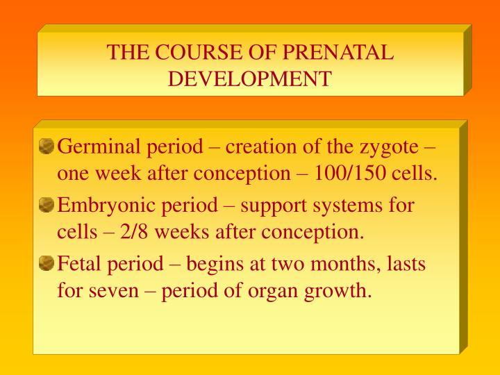 The course of prenatal development