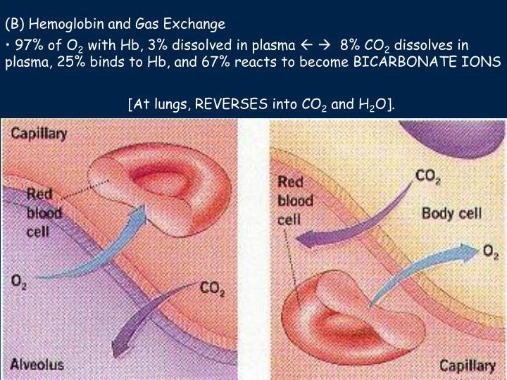 (B) Hemoglobin and Gas Exchange