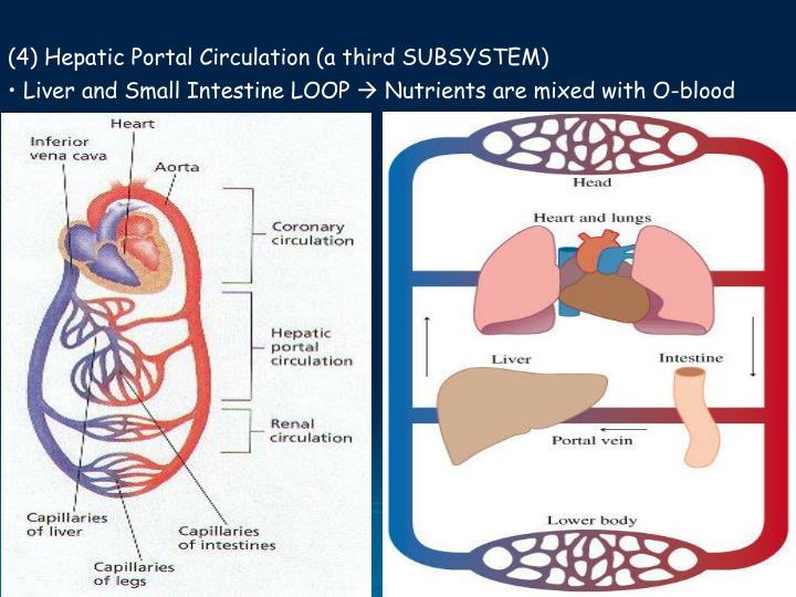 (4) Hepatic Portal Circulation (a third SUBSYSTEM)