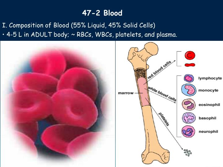47-2 Blood