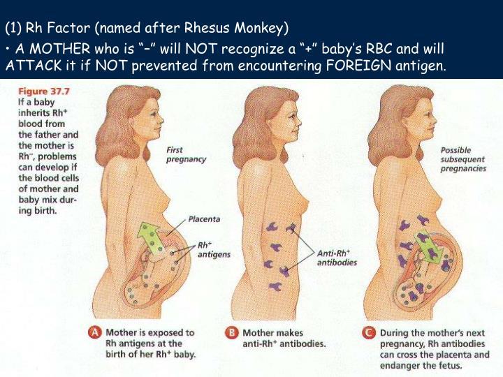 (1) Rh Factor (named after Rhesus Monkey)