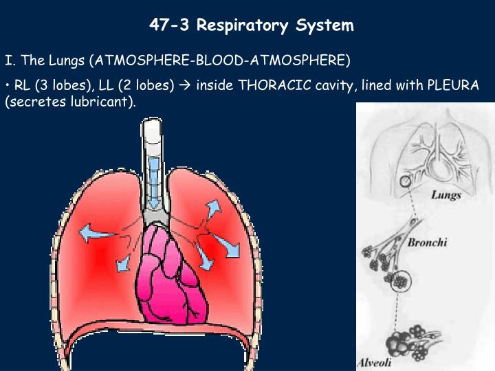 47-3 Respiratory System