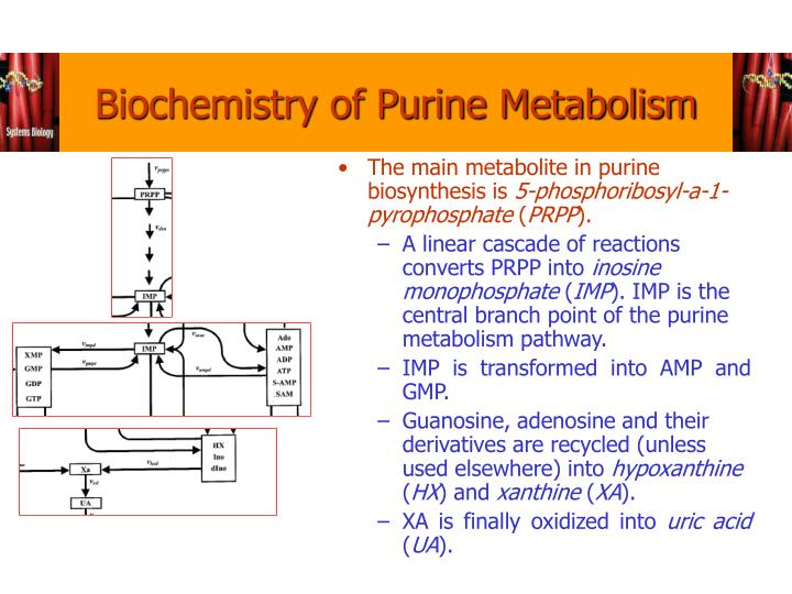 Biochemistry of Purine Metabolism