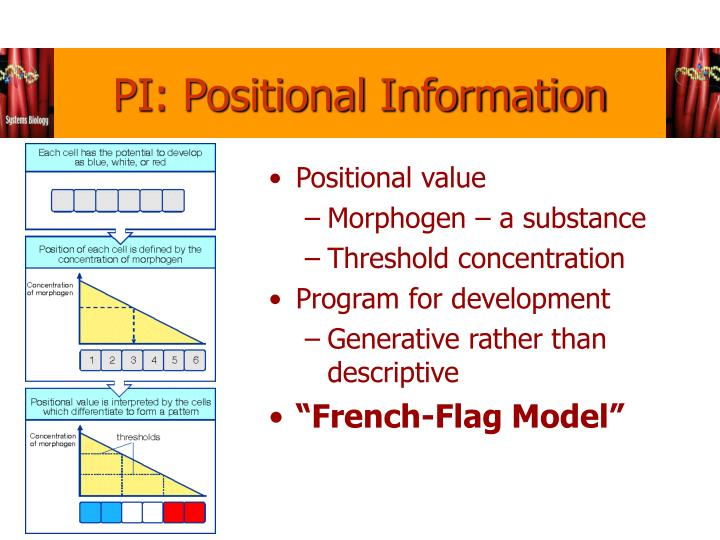 PI: Positional Information