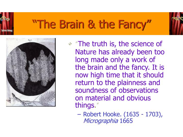 """The Brain & the Fancy"""