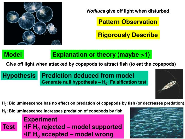 Give off light when attacked by copepods to attract fish (to eat the copepods)