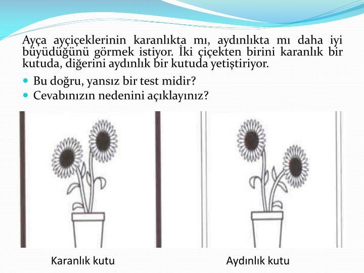Ayça ayçiçeklerinin karanlıkta mı, aydınlıkta mı daha iyi büyüdüğünü görmek istiyor. İki çiçekten birini karanlık bir kutuda, diğerini aydınlık bir kutuda yetiştiriyor.