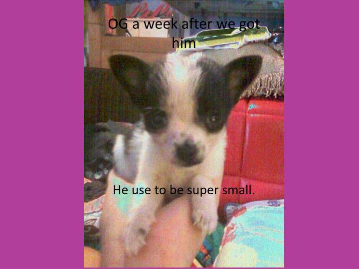 OG a week after we got him