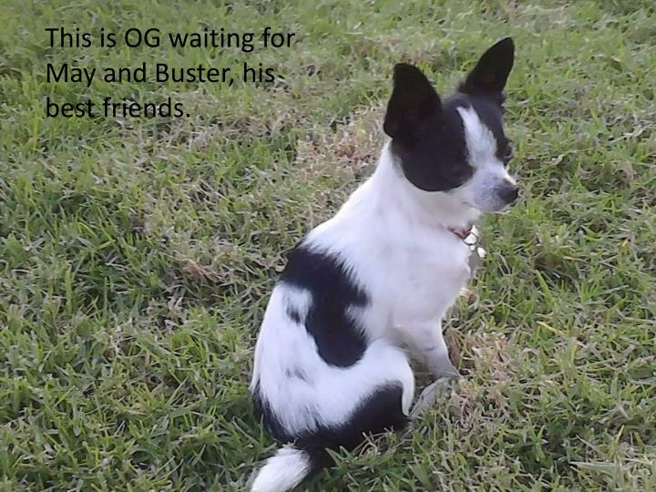 This is OG waiting for May and Buster, his best friends.