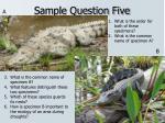 sample question five