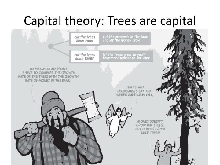 Capital theory: Trees are capital