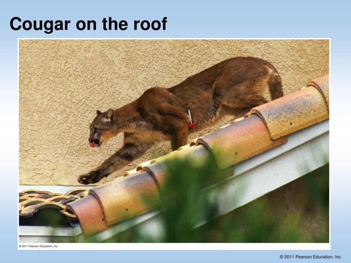 Cougar on the roof
