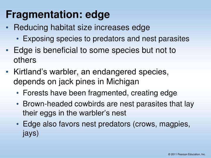 Fragmentation: edge
