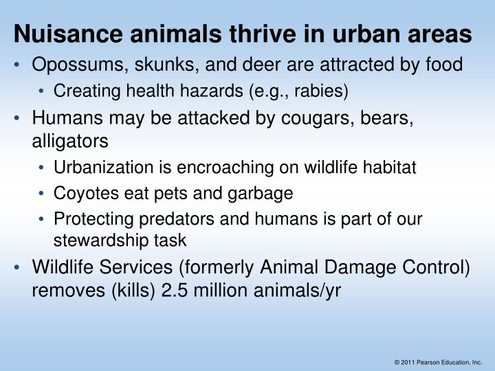 Nuisance animals thrive in urban areas
