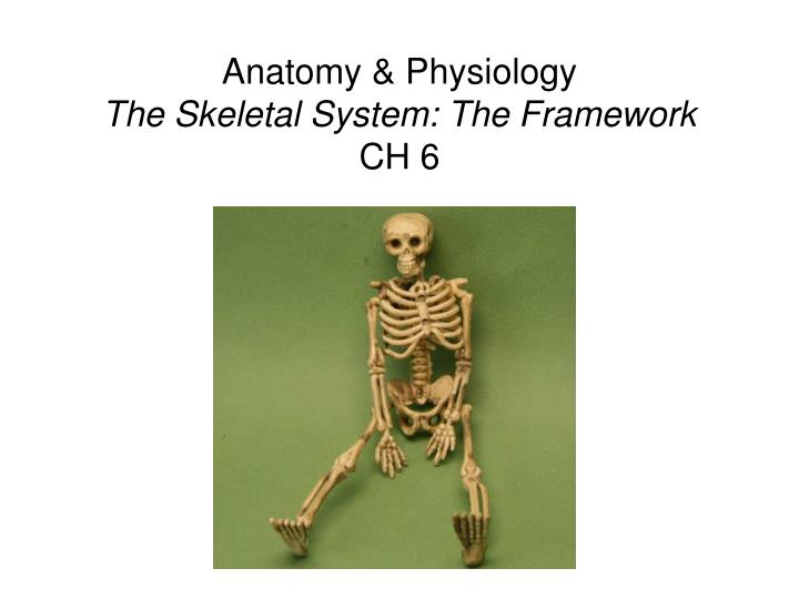 PPT Anatomy Physiology The Skeletal System The