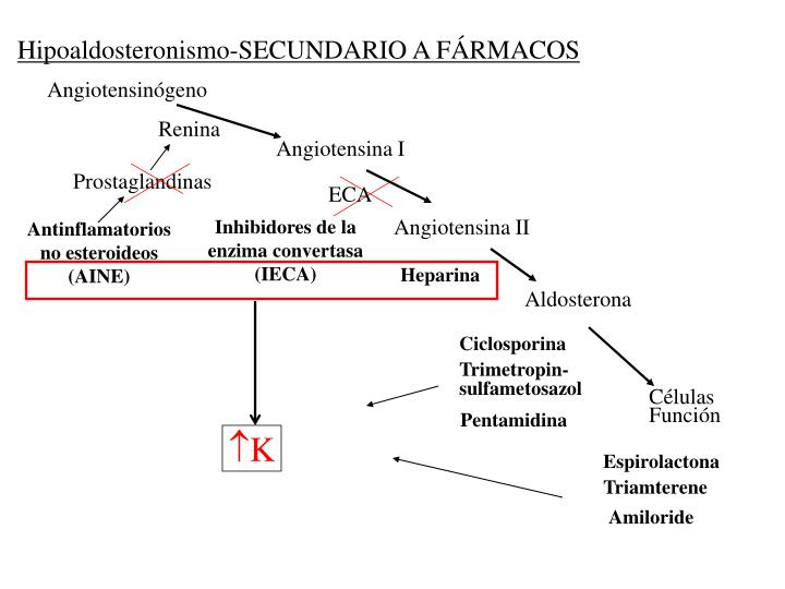 Angiotensinógeno