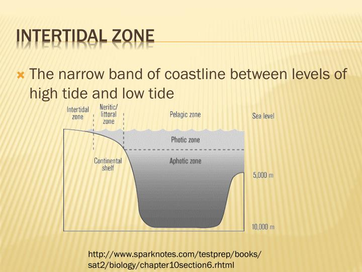 The narrow band of coastline between