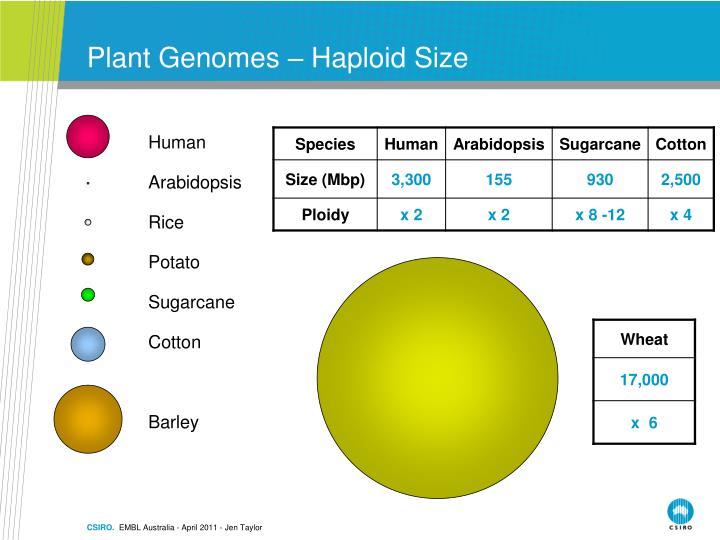 Plant Genomes – Haploid Size
