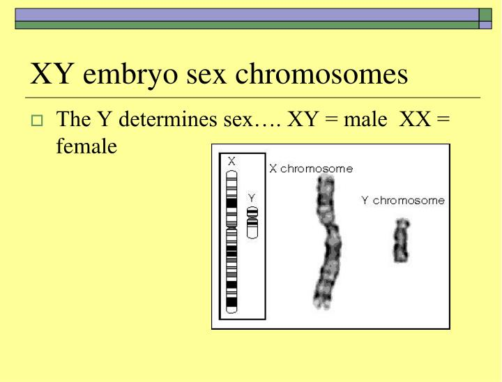 Ppt - Chromosome Theory Of Inheritance Powerpoint -8676