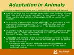 adaptation in animals