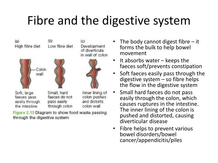 Fibre and the digestive system
