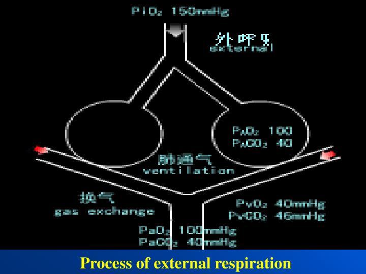 Process of external respiration