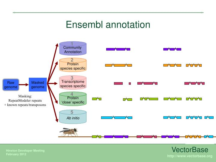 Ensembl annotation