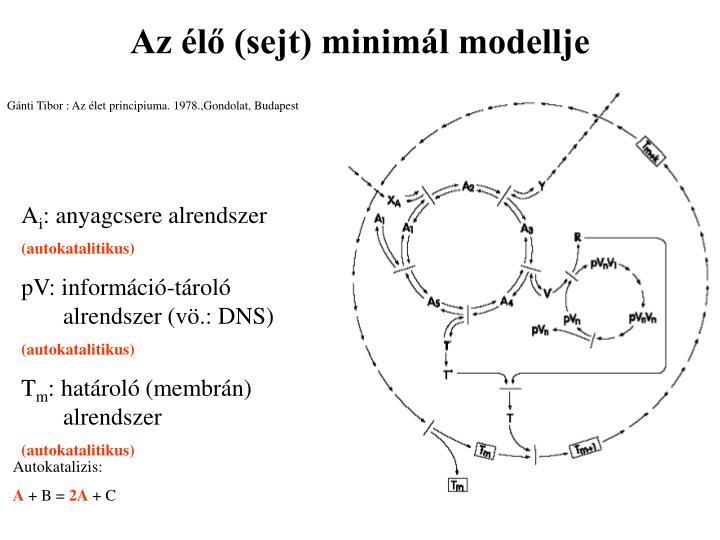 Az élő (sejt) minimál modellje