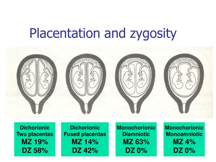Placentation and zygosity