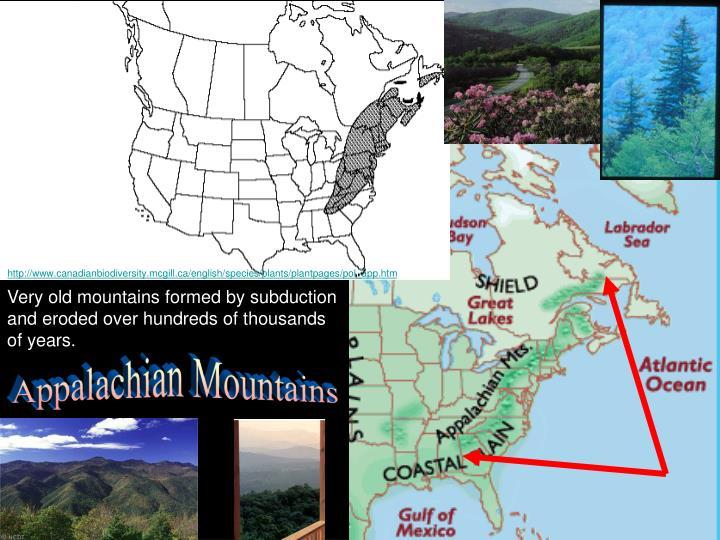 http://www.canadianbiodiversity.mcgill.ca/english/species/plants/plantpages/pol_app.htm