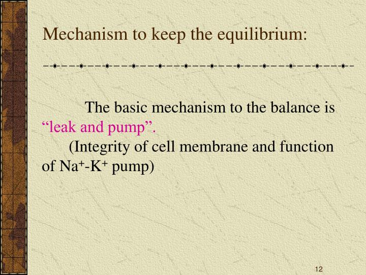 Mechanism to keep the equilibrium: