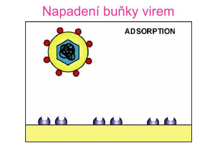 Napadení buňky virem