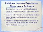 individual learning experiences shape neural pathways