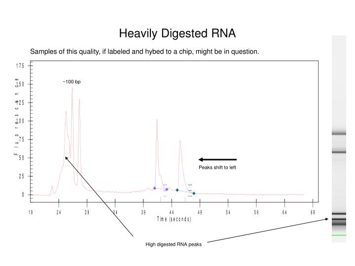 Heavily Digested RNA