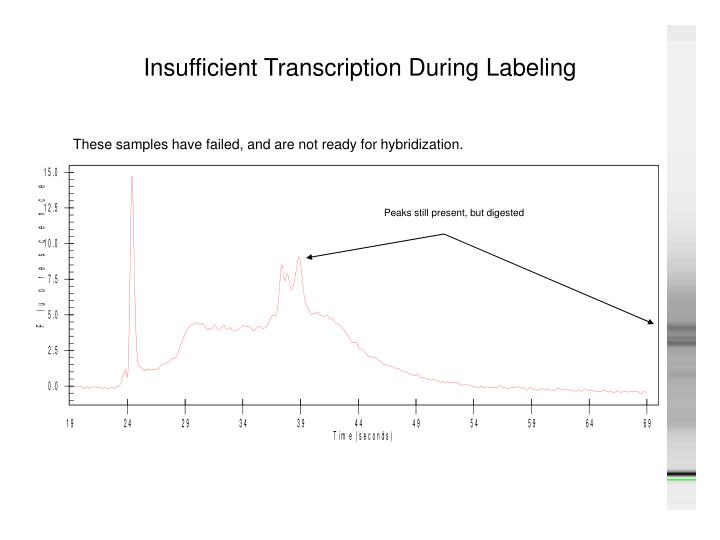 Insufficient Transcription During Labeling