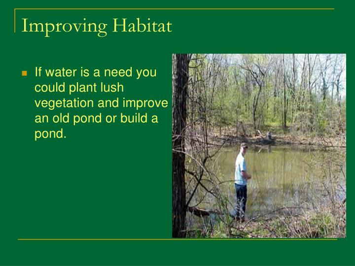 If water is a need you could plant lush vegetation and improve an old pond or build a pond.