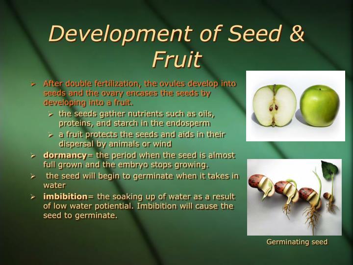 Development of Seed & Fruit
