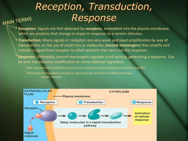 Reception, Transduction, Response