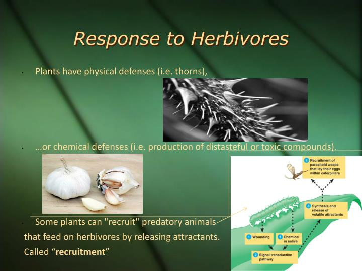 Response to Herbivores