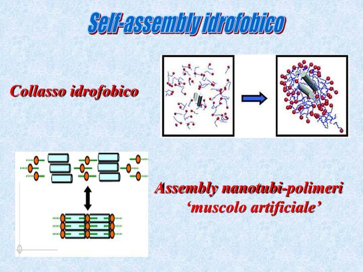 Self-assembly idrofobico