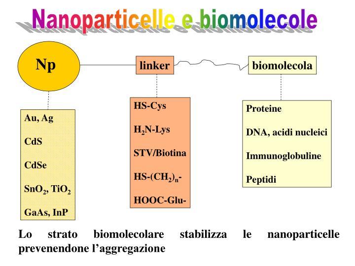 Nanoparticelle e biomolecole
